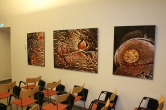 Lennart Nilsson's photography in the seminar room in D house