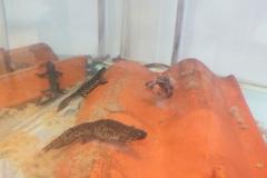 Salamanders at CMB