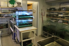 Zebra fish aquariums
